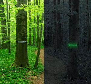 Whether you are marking a path to your campsite or a trail in the woods, these reflective trail markers will guide the way during the day or night. At dusk, simply press the button on the trail marker to illuminate the LEDs within. The trail markers have two illumination settings, solid and flashing.